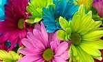 bloom-close-up-colorful-8577.jpg